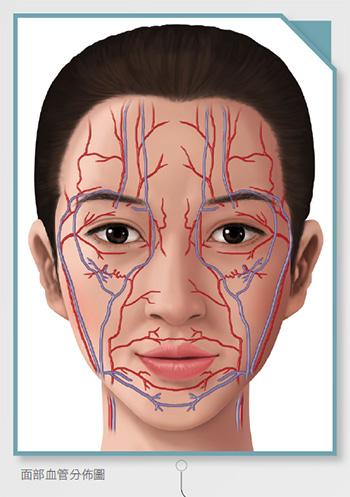 面部解剖学及医师触诊